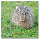 Hare_i_Haven_061-bes-web-bord.jpg